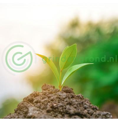 Bomenvoeding
