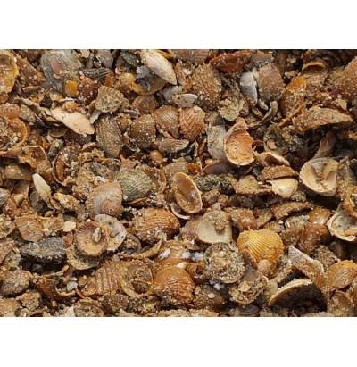 Bruine schelpen